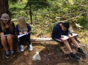 field-study-4